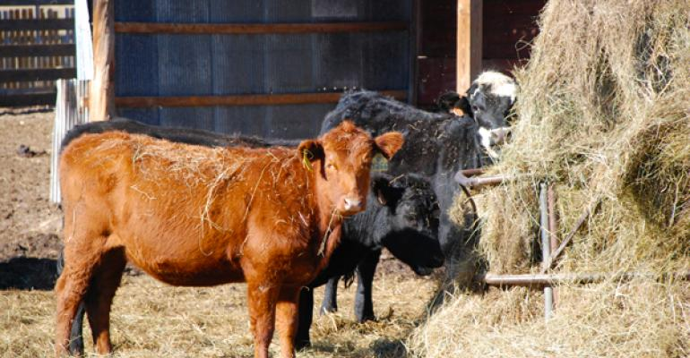 4 Tips To Cut Your Winter Feeding Bill